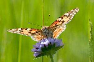 papillon-fleur.jpg